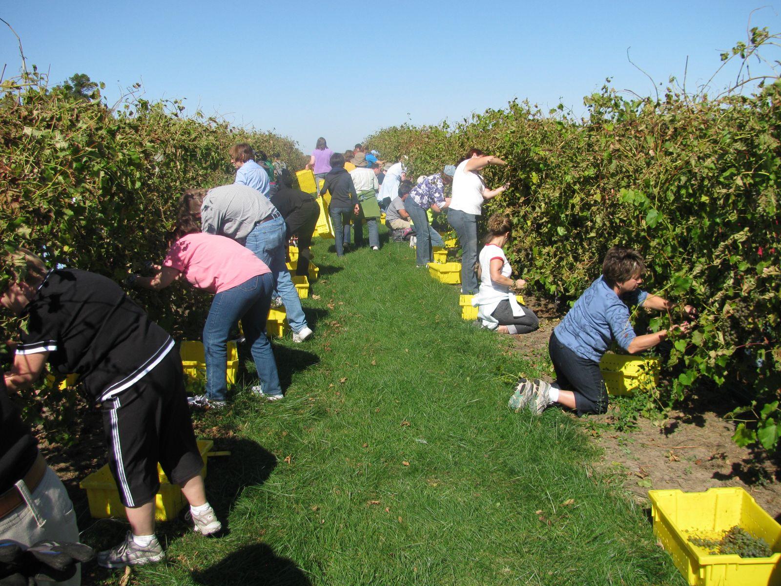 We'd Like To Say A Big THANK YOU To All Of Our 2010 Harvest Volunteers!